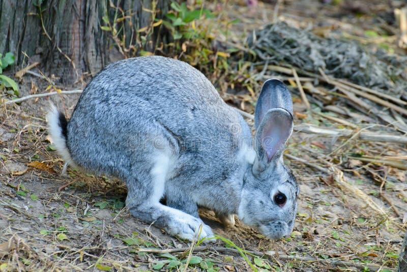 En kanin i trät royaltyfri bild
