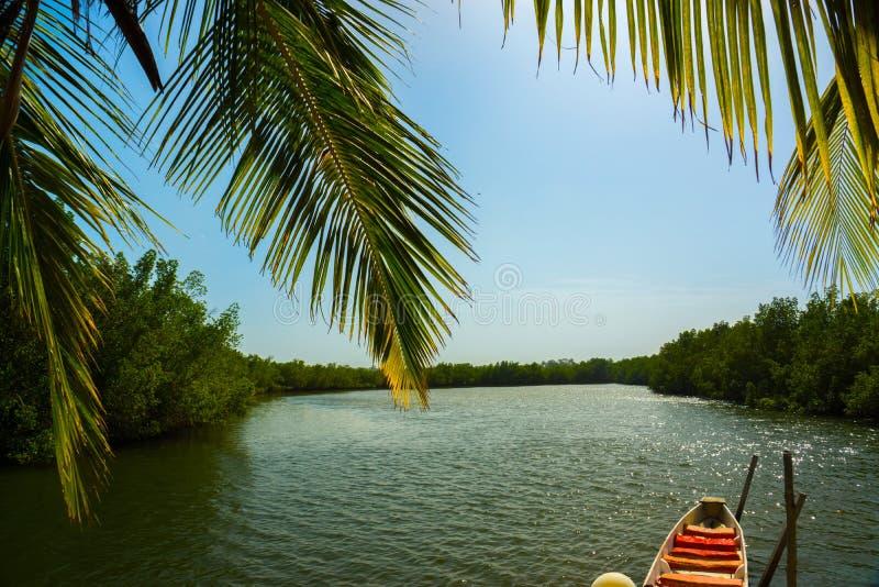 En kanot på floden Gambia, Afrika arkivbild