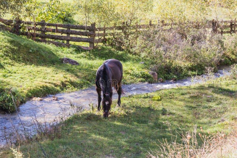En kastanjebrun häst är betande på en grön äng nära en grund ström royaltyfri bild