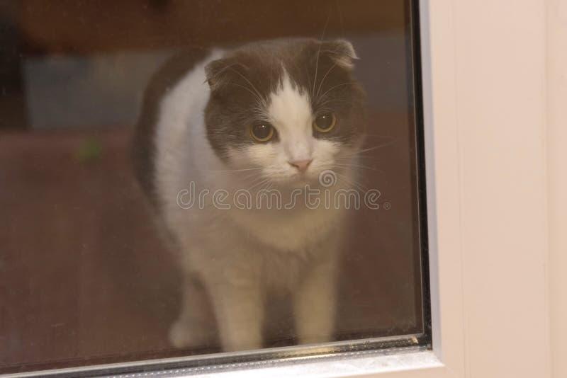 En katt är bak en glass dörr som väntar på ägaren fotografering för bildbyråer