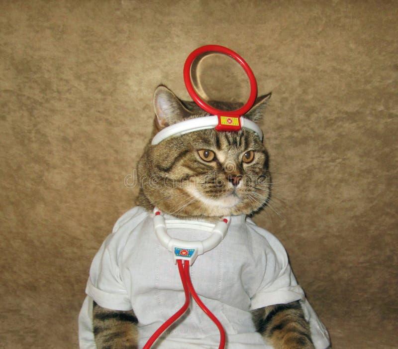 En katt är en doktor arkivfoton