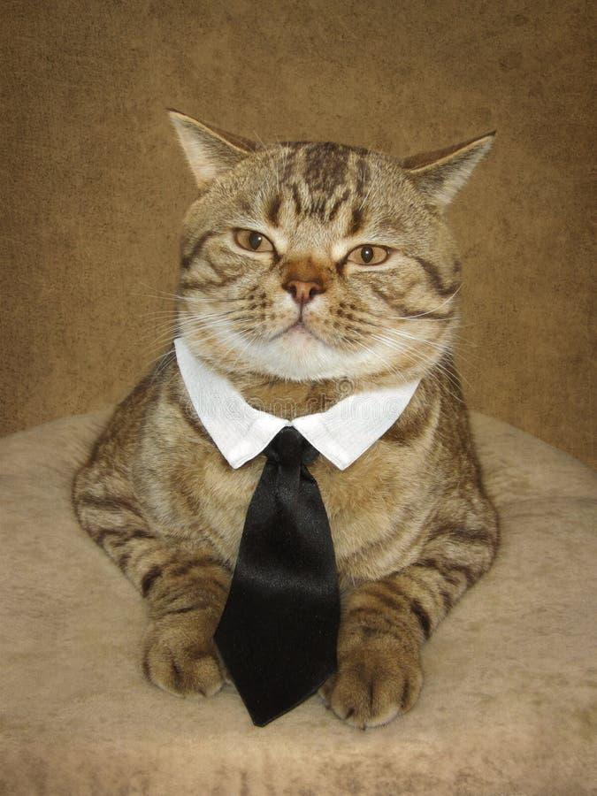 En katt är en som är årig royaltyfri fotografi