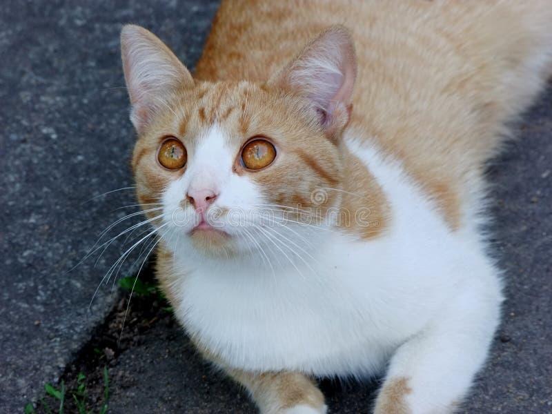 En katt royaltyfria foton
