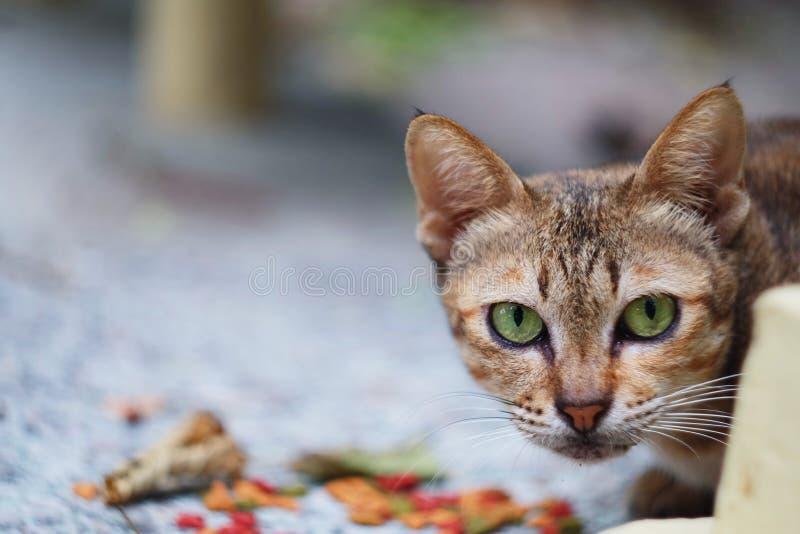En katt arkivfoton