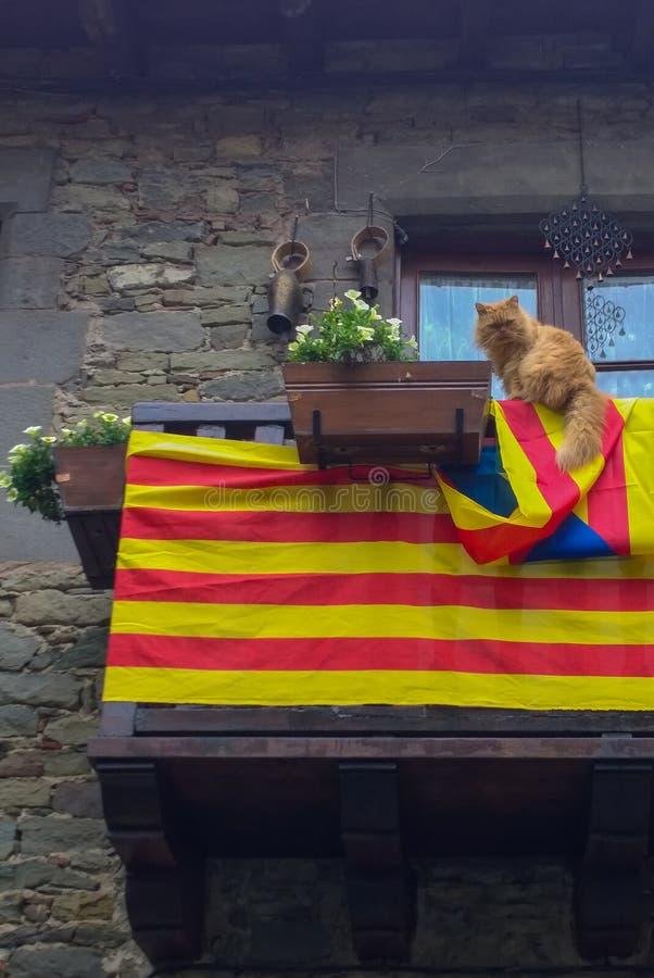 En katt för självständighet royaltyfri fotografi