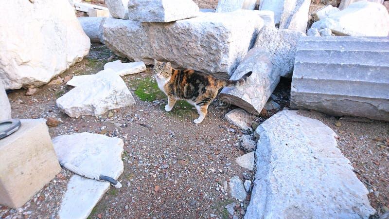 en katt i ephesus arkivfoton
