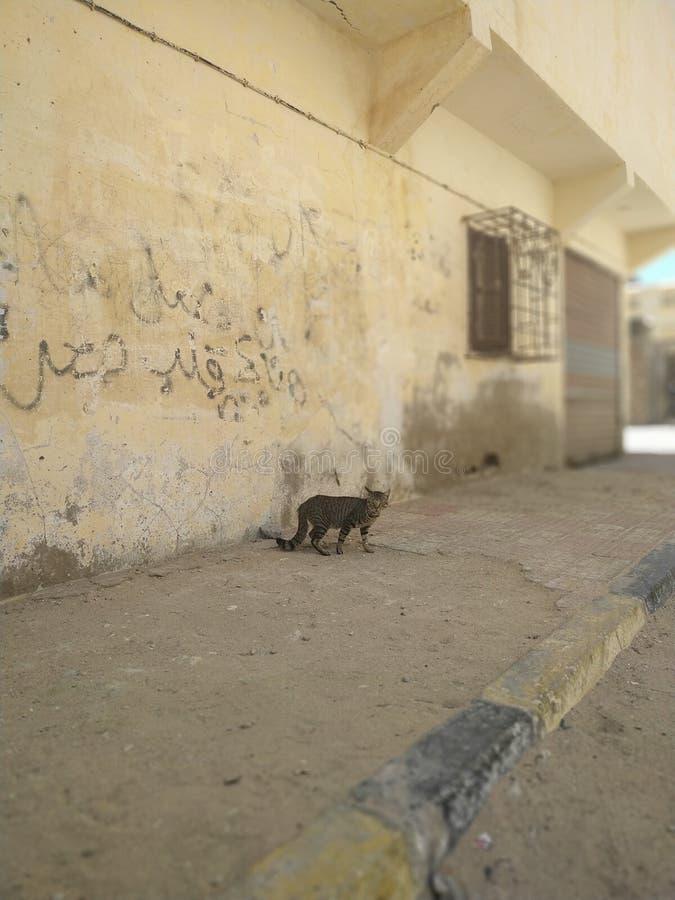 En katt i gatan fotografering för bildbyråer