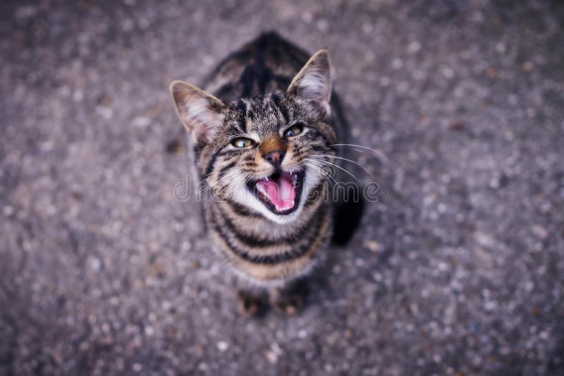 En katt i en ilsken stituation royaltyfria bilder