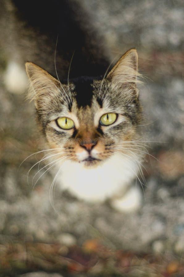 En katt med härliga ögon arkivfoto