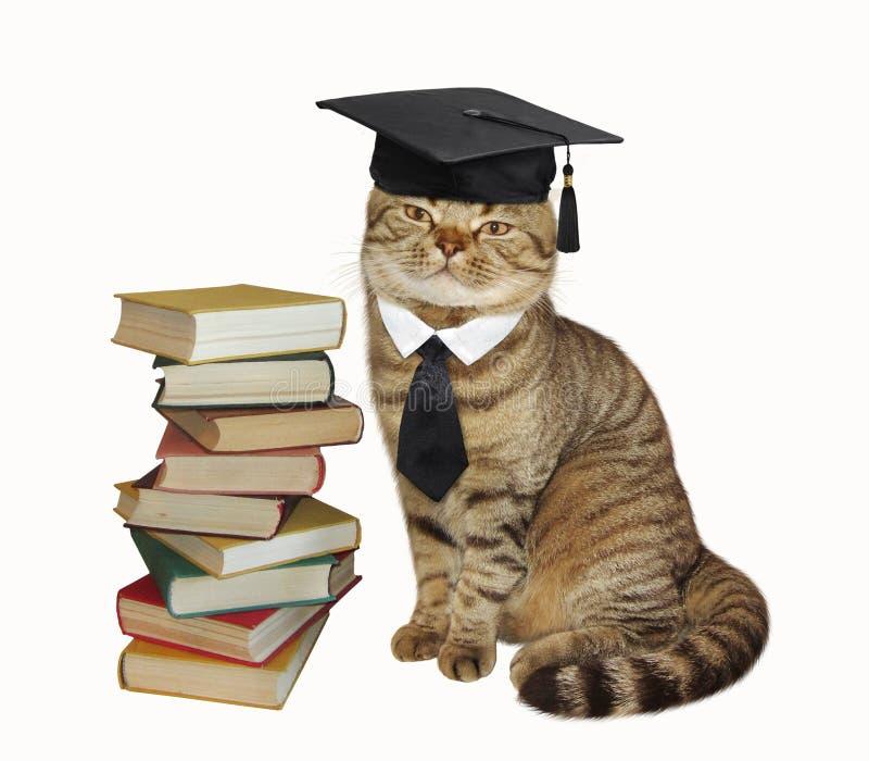 En katt och böcker arkivfoton