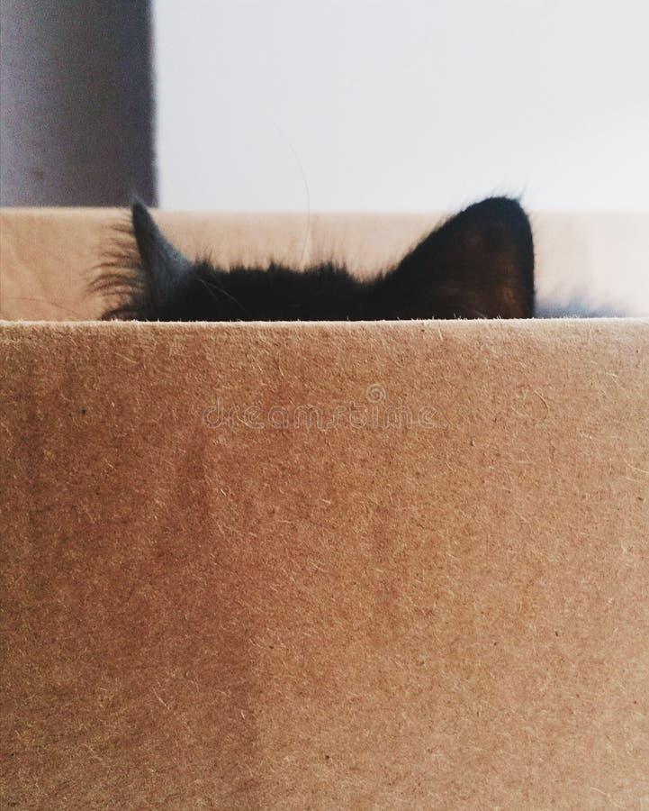 En katt och en ask arkivbilder