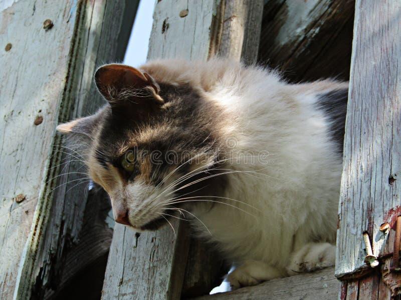En katt på balkongen arkivfoton