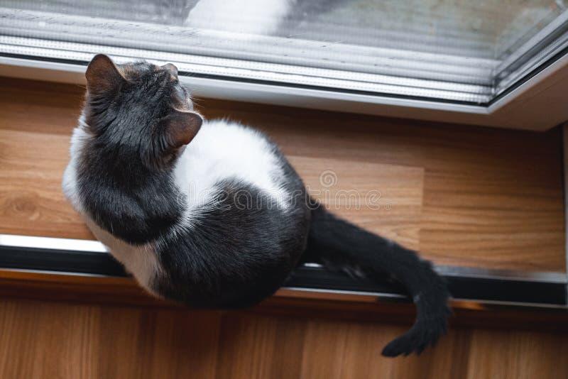 En katt sitter nära fönster och ser nyfiket regn utanför fönster royaltyfri bild