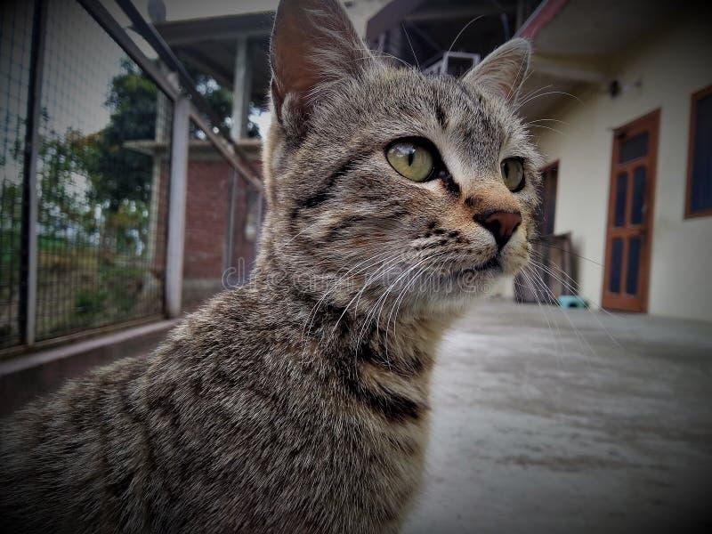 En katt som förvånansvärt ser något arkivfoton