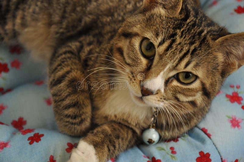En katt som lägger på säng fotografering för bildbyråer