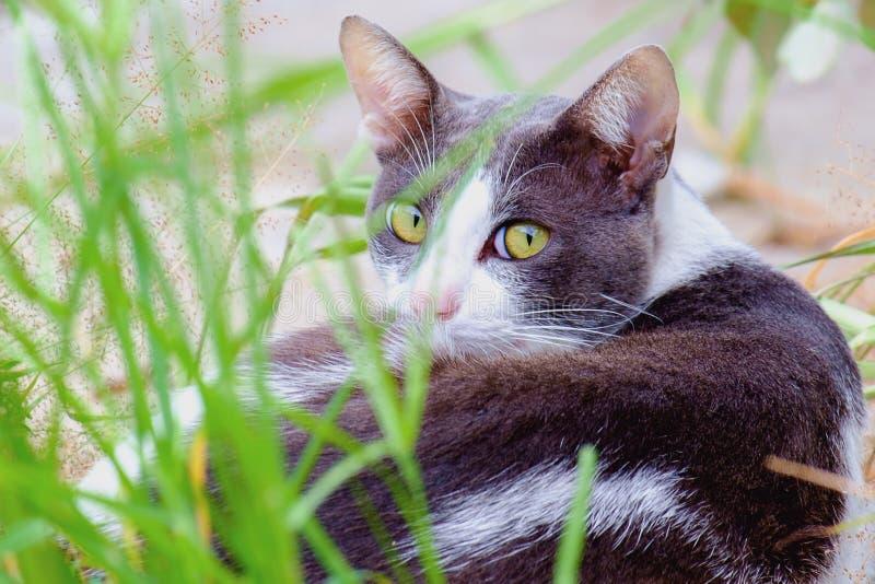 En katt som ligger i det gröna gräset arkivbilder