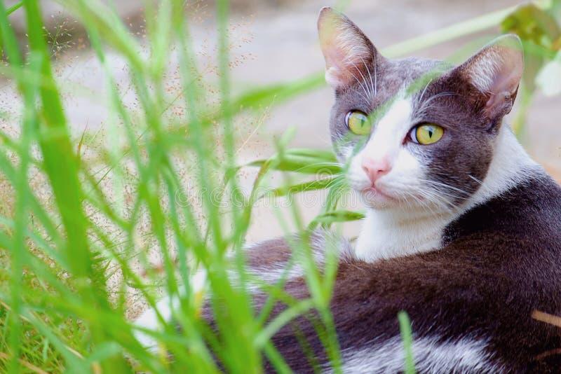 En katt som ligger i det gröna gräset royaltyfria bilder