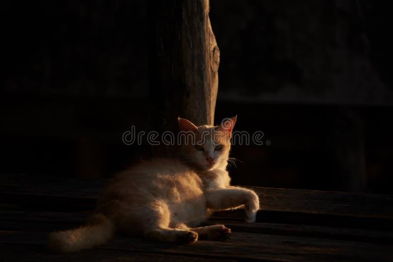 En katt som ligger med solljus och skugga royaltyfri bild