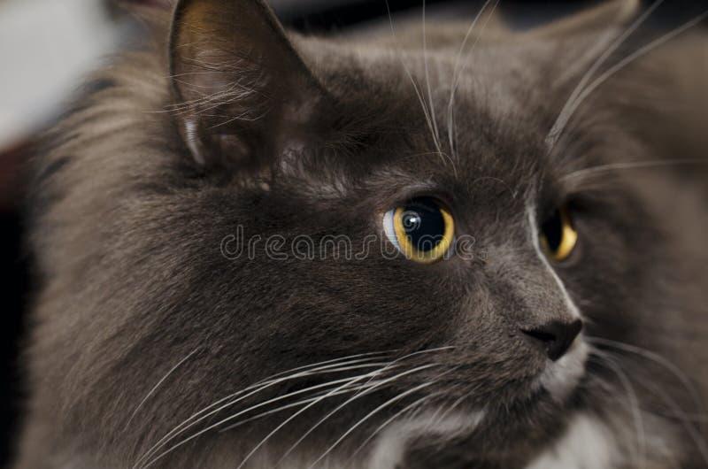 En katt som relaxaxing arkivfoton