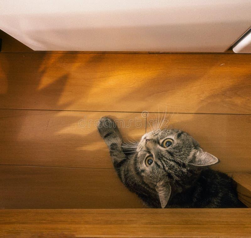 En katt som stirrar på mig royaltyfria bilder