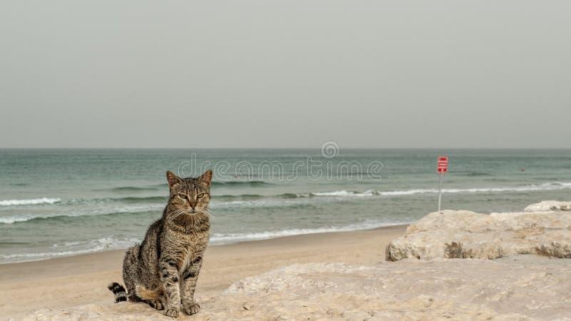 En katt vid stranden arkivfoton