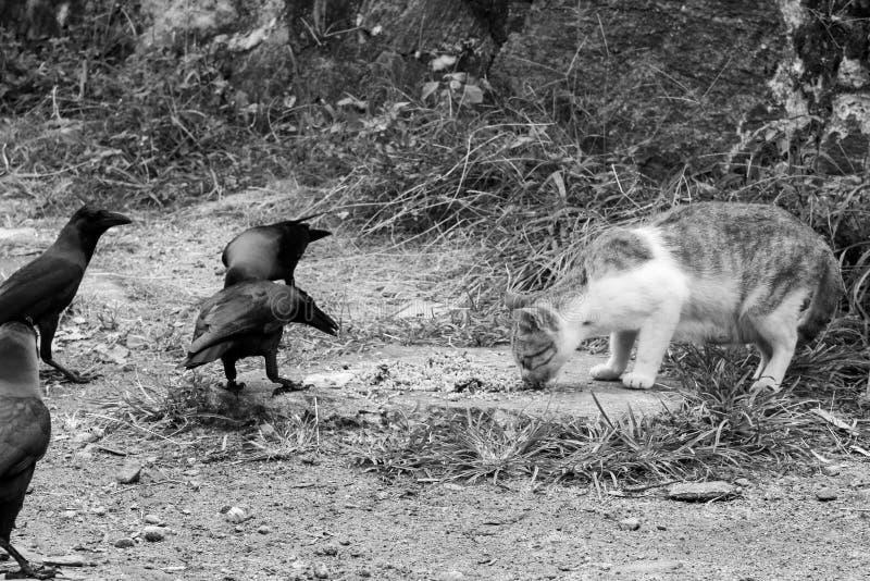 En katt vid waysiden äter Gal korpsvart runt om katten royaltyfria bilder