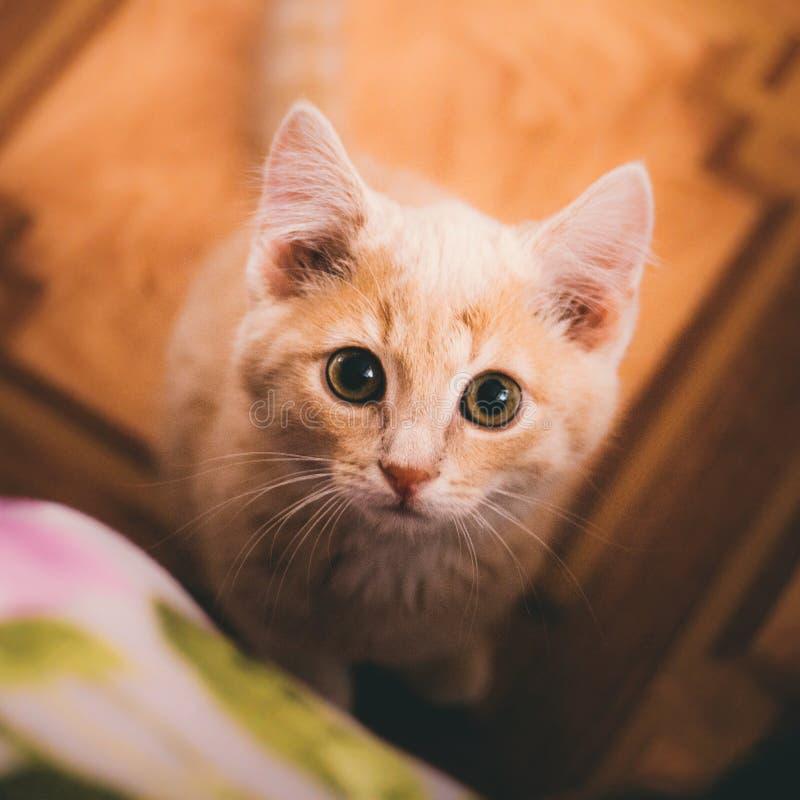 En kattunge ser kameran arkivbild