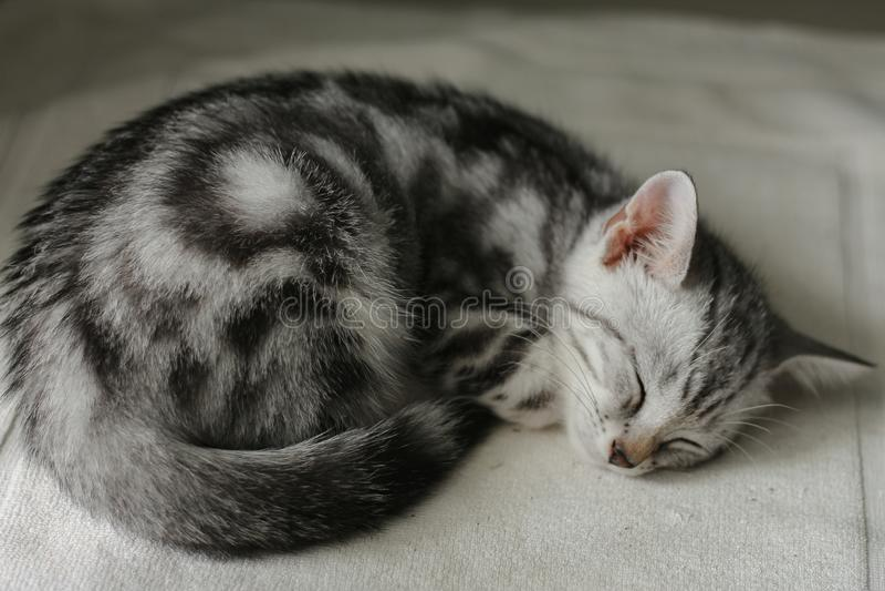 En kattunge som sover blick som en snigel royaltyfria foton
