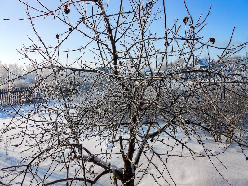 En klar dag för vinter ett lantligt landskap med en lantlig trädgård som täckas med snö djupfrysta filialer av träd i rimfrost mo royaltyfri fotografi