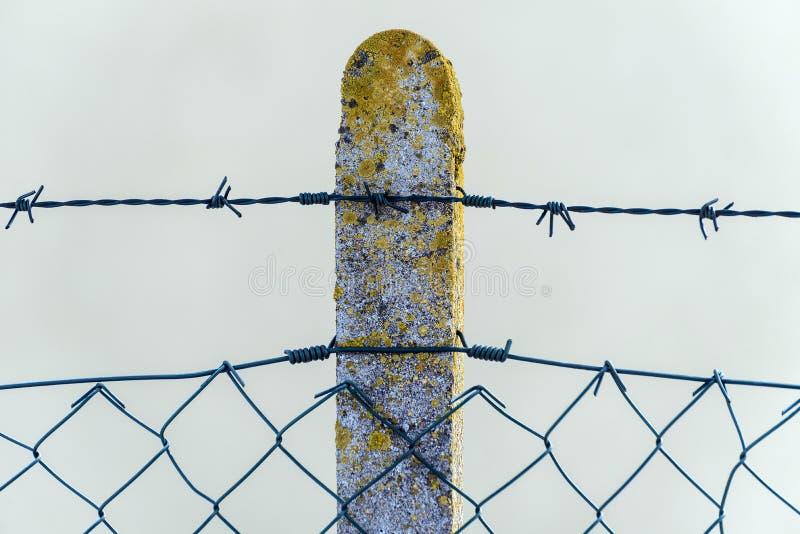 En konkret kolonn som täckas med en gul mossa med försett med en hulling - tråd arkivfoto