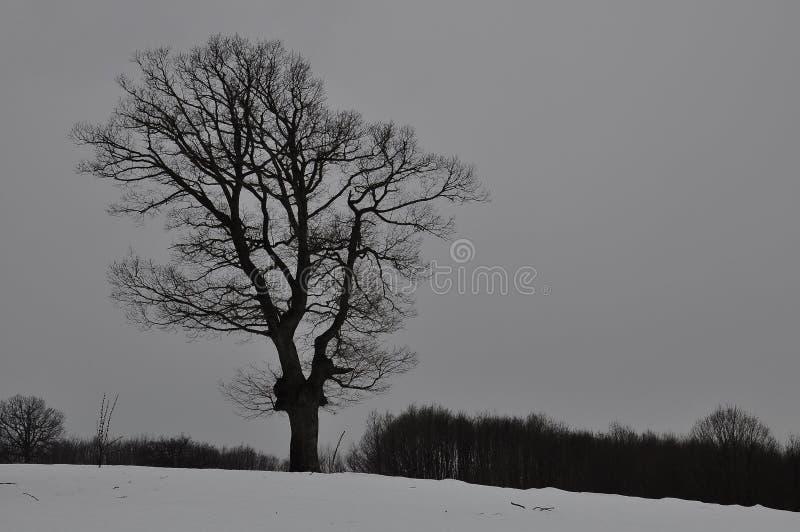 En kontur av ett träd royaltyfria bilder