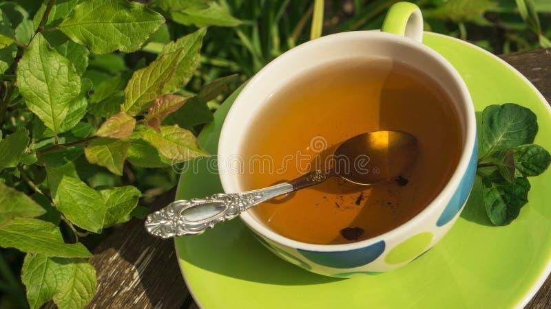 En kopp av örtte (bryggade hallon- och svart vinbärsidor) med en silversked i ensommar trädgård royaltyfri bild