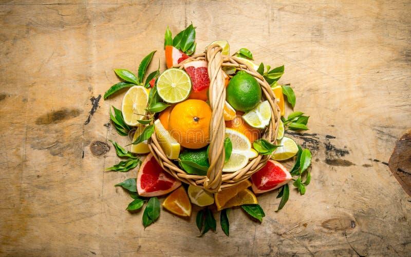 En korg mycket av citrusfrukter - grapefrukt, apelsin, tangerin, citron, limefrukt och sidor royaltyfria bilder