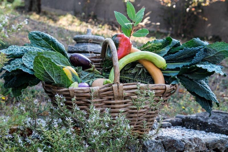 En korg mycket av organisk mat från fältet royaltyfria bilder