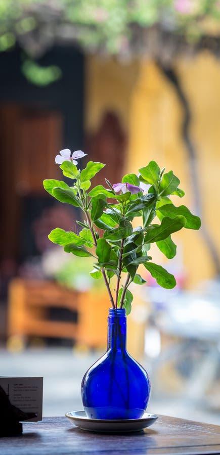 En kruka av blommor på coffee shop i Hoi An, Vietnam royaltyfri foto