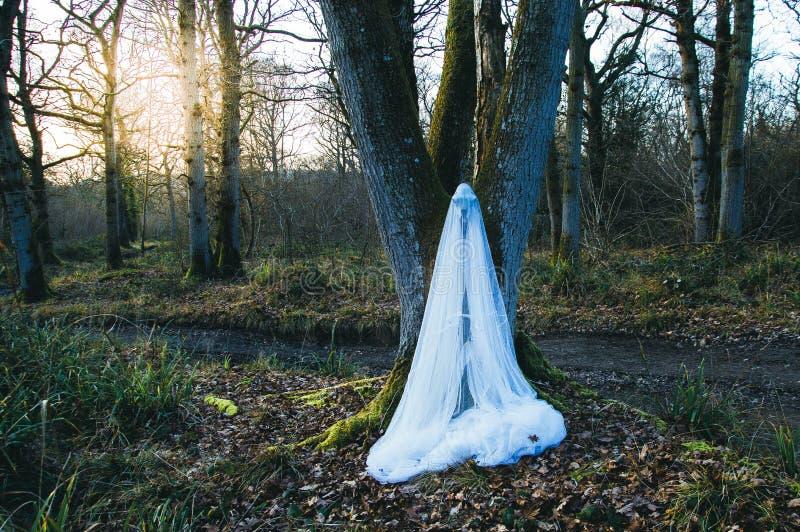 En kuslig fårskalle som hänger från ett träd som täckas, i att förtjäna, ina en skog i vinter Med ett dämpat spöklikt redigera arkivfoton