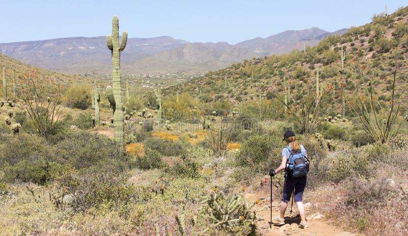 En kvinna fotvandrar gå John Trail, Arizona royaltyfria bilder