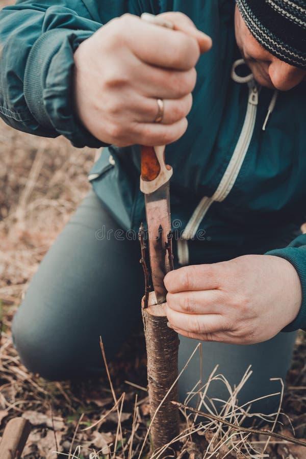 En kvinna klipper ett ungt tr?d med en kniv f?r inympningen av fruktfilialen arkivfoton
