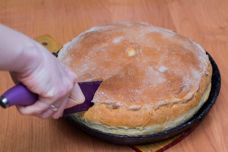 En kvinna klipper en köttpaj med en kniv En traditionell hemlagad bakelsematrätt ligger i en svart panna på tabellen royaltyfri fotografi