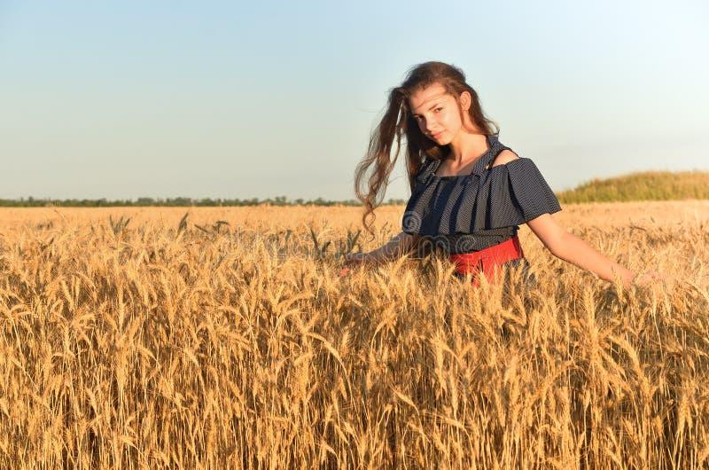 En kvinna med långt hår i klänningställningar bland vetet flockas i fältet arkivbilder