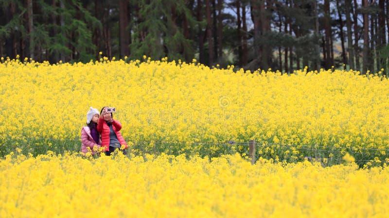 En kvinna och hennes dotter som beundrar canolafältlandskap fotografering för bildbyråer