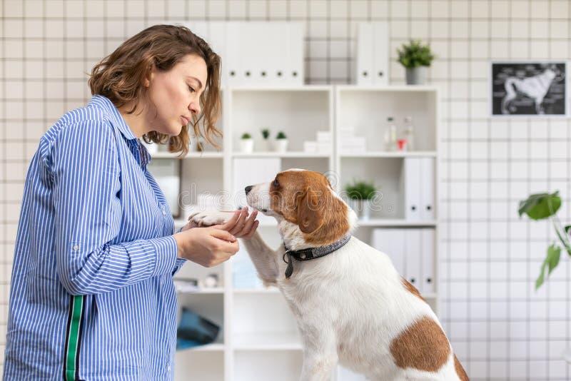 En kvinna och hennes hund på ett besök till den veterinär- kliniken slapp fokus royaltyfria bilder