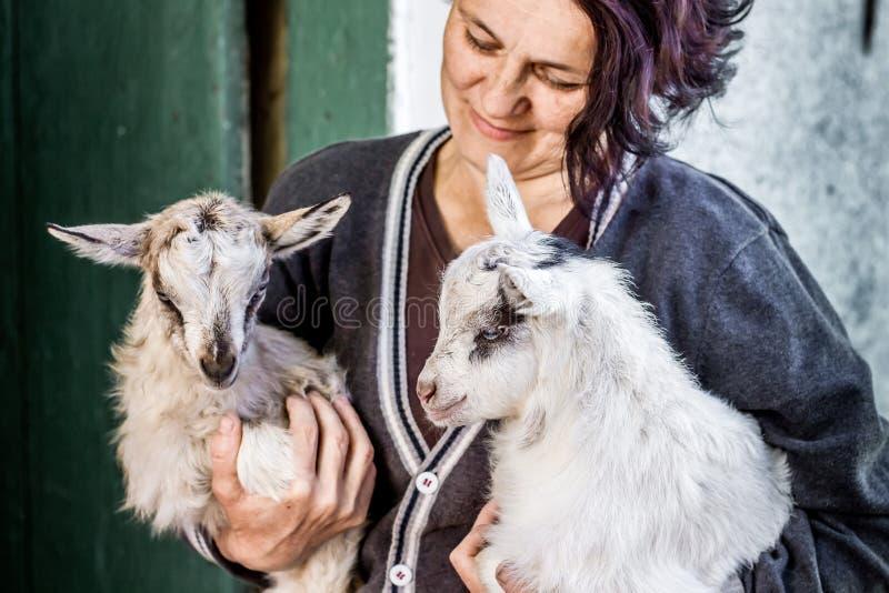 En kvinna rymmer små små getter på hennes händer Förälskelse för husdjur Th royaltyfria foton