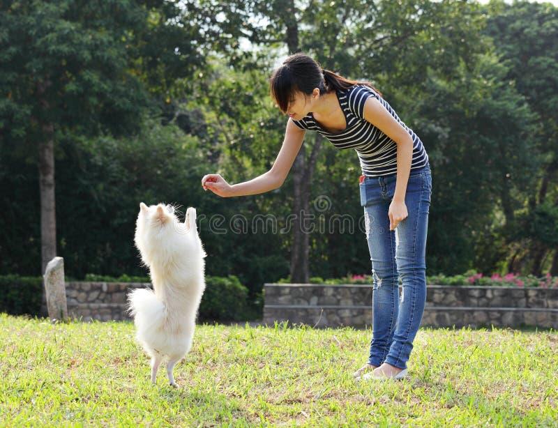 En kvinna utbildar henne hunden arkivfoton