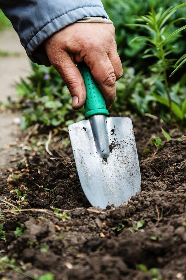En kvinnas hand gräver jord och jord med en skyffel Närbild Conce royaltyfria foton