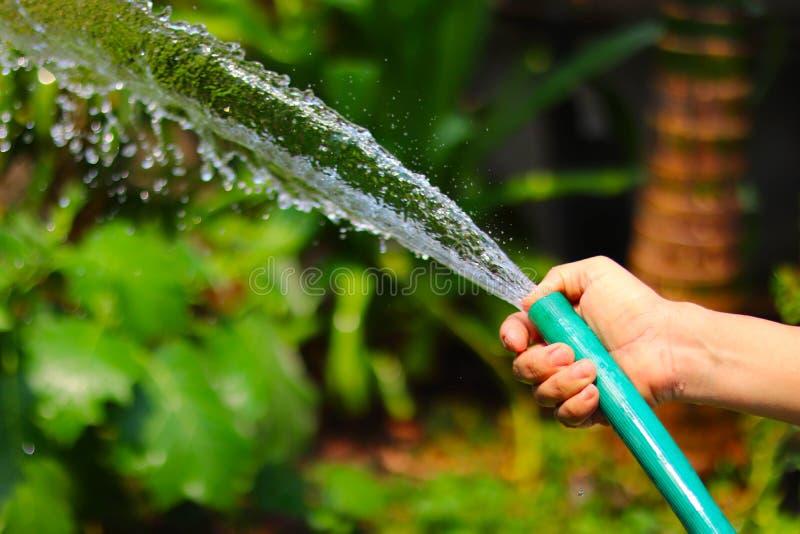 En kvinnas hand som rymmer den gröna vattenslangen som bevattnar växterna och blommorna på botaniskt, ekologiskt och miljö- C arkivbild