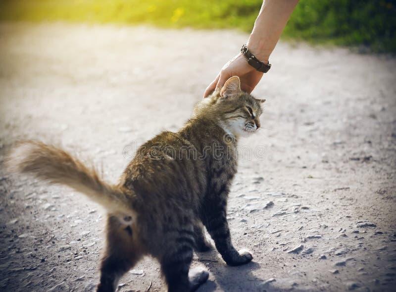 En kvinnas hand som slår en ung randig hemlös fluffig kattunge royaltyfria bilder
