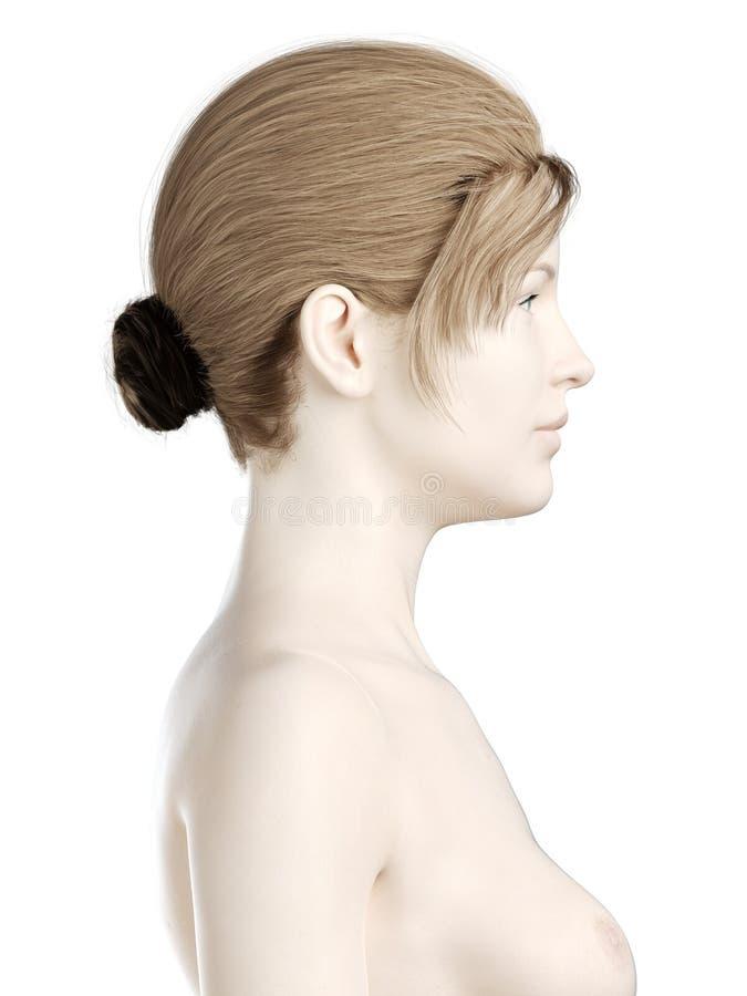 En kvinnas huvud vektor illustrationer