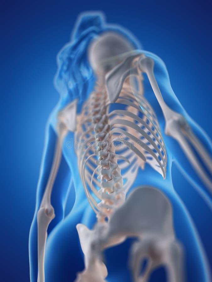 En kvinnas rygg stock illustrationer