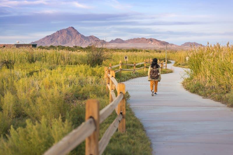 En kvinnawalkimg på slingan i våtmarker parkerar Las Vegas arkivfoto